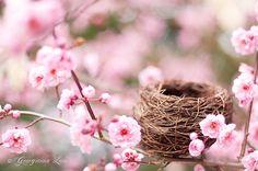 bird nest in flowers♥
