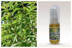 Aceite esencial de Cedrón. 30 ml. Sin agroquímicos ni aditivos. Extracción por métodos artesanales. Resolución de Salud.