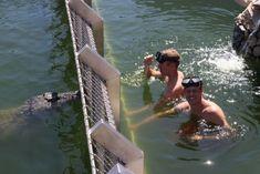 Afrikanos Crocodile Experience | Gansbaai - Dirty Boots Nile Crocodile, Enter The Dragon, Adventure Activities, Tour Guide, Pond, Holland, Ocean, Tours, River