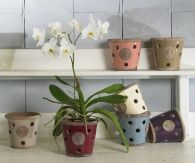 RHS Kew Gardens Orchid Pots