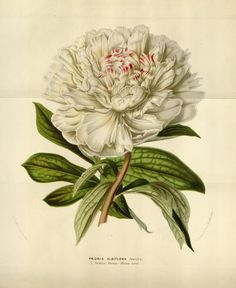 http://biodiversitylibrary.org/item/88076