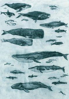 dahinwoderpfefferwaechst: einmal im leben möchte ich wale sehen, delfine sind was für mädchen.