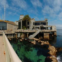 Monterey Bay Aquarium... Super cool outside exhibit