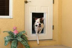 Door-inset doggy door