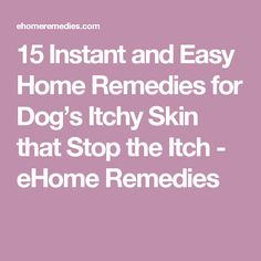 15 Instant and Easy Home Remedies for Dog's Itchy Skin that Stop the Itch - eHome Remedies. Fleas And Itchy Skin Dog Itchy Skin Remedy, Dry Skin Remedies, Home Remedies For Acne, Itching Remedies, Stop Dog Itching, Apple Cider Vinegar Dogs, Dog Skin Allergies, Allergy Remedies, Healthy Pets