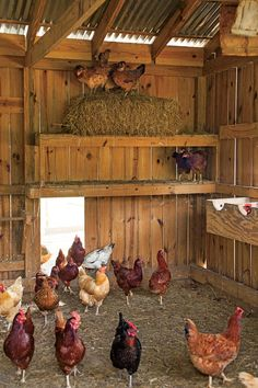 A Day on the Farm - Coming Home To Roost - Southernliving. The family's amassed nearly 30 hens.