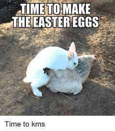 22 funny easter memes jokes 2019 funny egg bunny pics happy easter 2019 funny easter memes and images for sharing Happy Easter Meme, Funny Easter Jokes, Funny Easter Pictures, Funny Easter Bunny, Funny Eggs, Funny Bunnies, Funny Animal Pictures, Funny Images, Animal Jokes