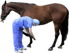 Veterinarian do not just practice on dogs and cats. Some vets specialize on horses and other large or aquatic mammals. Mammals, Dog Cat, Horses, Cats, Gatos, Cat, Kitty, Horse, Kitty Cats