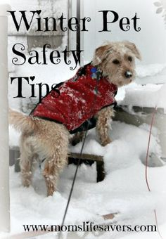 More pet safety tips.