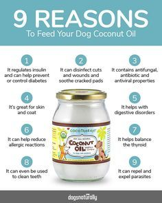 Homemade Dog Food It's no secret that Coconut Oil is highly beneficial to your dog! Here are 3 great coconut oil recipes for your dog's skin, immune system and more . Dog Health Tips, Pet Health, Health Care, Coconut Oil For Dogs, Dog Nutrition, Nutrition Classes, Oils For Dogs, Dog Diet, Coconut Health Benefits