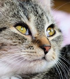 Has your cat been diagnosed with FeLV? Are you worried of the symptoms of FeLV that they are experiencing? We can help.