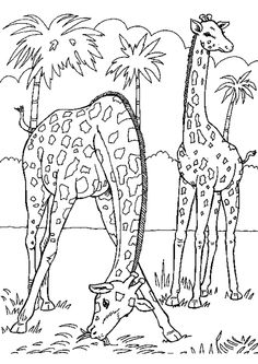 Coloring Pages African Animals. 20 Coloring Pages African Animals. African Coloring Pages Africa Kids Crafts and Activities Zoo Animal Coloring Pages, Giraffe Coloring Pages, Coloring Pages To Print, Free Printable Coloring Pages, Coloring Book Pages, Coloring Pages For Kids, Coloring Sheets, Kids Coloring, Coloring Pictures Of Animals