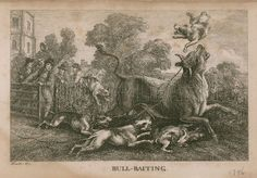 Bull Baiting Images Bulldog Breeds