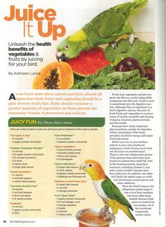 Feed your pet bird nutrient-packed fruit and vegetable juice