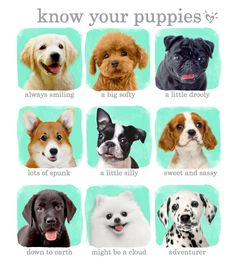 Pups with personality! Which one is your fave? We bet you can't choose just one!