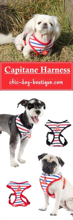 """Let your furry sailor dog lead the way in the Puppia Capitane Harness. Available in red or navy, this dog walking harness is designed with stripes and an embroidered anchor. The harness slips over the dog's head and then secures with an adjustable chest belt and quick-release buckle. A sturdy, nickel-plated """"D"""" ring at the back of the harness allows for attachment of a dog leash or lead. Matching leash is available."""