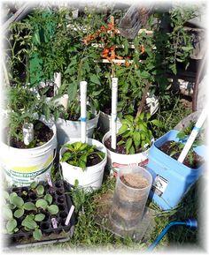 An entire bucket garden Bucket Gardening, Urban Gardening, Vegetable Gardening, Organic Gardening, Container Gardening, Garden Crafts, Garden Projects, Garden Ideas, Root Veggies