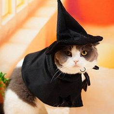 Bro'Bear Pet Mysterious Hooded Cloak Witch/Wizard Costume for Small Dogs & Cats Party Cosplay Black (Medium/3#)