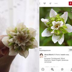 "256 Likes, 7 Comments - Atelier Ryeo - Daegu, Korea (@atelier_ryeo) on Instagram: ""Anemone nemorosa ""Green Fingers""  bean paste flower class  bean flower  #대구플라워케이크 #대구꽃배움반 #대구앙금플라워…"""