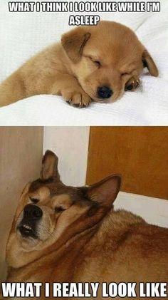 What I think I look like while I'm asleep What I really look like #Monday #Work