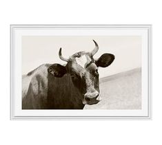 """Horned Cow by Jennifer Meyers, 42 x 28"""", Ridged Distressed, White, Mat"""