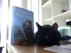 Find a book your cat loves