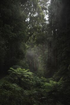 hullocolin: Dandenong Ranges National Park Australia Tumblr |...