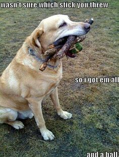 Mind Blowing Facts About Labrador Retrievers And Ideas. Amazing Facts About Labrador Retrievers And Ideas. Humor Animal, Animal Memes, Animal Mashups, Animal Captions, Funny Captions, Funny Memes, Dog Memes, Funny Animals With Captions, Videos Funny