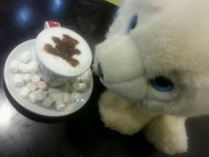 (130) Paul Wheeler's daughter wanted to share this picture of her teddy and the teddy on her Bambinochino! Nice!