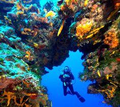 Day 3: Palancar Reef, Cozumel, Mexico http://www.alandchuck.travel/trip/?triID=37#TripOverview #alandchucktravel #gaydays #vacation #vagaytion #gaycation #orlando #mexico