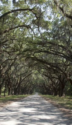 The perfect family-friendly weekend in Savannah on Roadtrippers