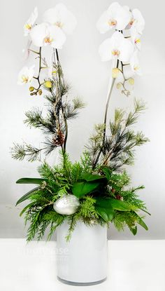 1000 images about orchid decor on pinterest orchids Christmas orchid arrangements