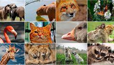 ¡Feliz día a nuestros mejores amigos, los animales!