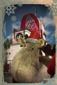 Our office reindeer was out and about looking for a new home in time for Christmas, including a stop at the Laxey Wheel.