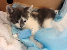 Anjellicle Cats Rescue Chipin Page - help with medical costs of injured and sick cats. They pull a lot of cats from Animal Care & Control to help them find loving homes. Please consider helping the severely injured cats.