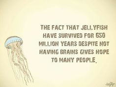 The fact that jellyfish have survived for 650 million years despite not having brains gives hope.
