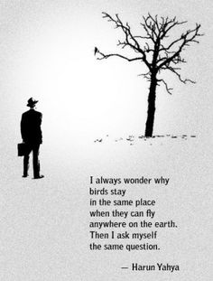 I always wonder why birds stay in the same place...