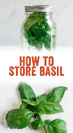 Cut herbs wilt so quickly, especially basil! Want to extend the life of your herbs? Here's a trick of how to store fresh basil. Storing Fresh Basil, Freezing Fresh Herbs, Herb Recipes, Canning Recipes, Vegan Recipes, Preserving Basil, Basil Harvesting, Fresco, Basil Plant