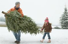 We all want our Christmas trees to last through the holiday season, but it actually doesn't take more than a few days of heat and neglect to dry out a fresh one. With proper care, most trees can last five weeks or more. #Christmastree