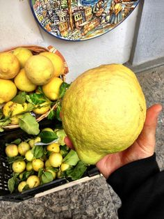 world famous giant amalfi lemons.  i cut this thing in half, put some sugar on it, and ate it with a spoon like a grapefruit.  just delicious:)