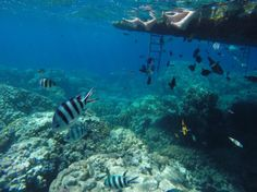 Holiday in Sharm El Sheikh...more GoPro images to see :)