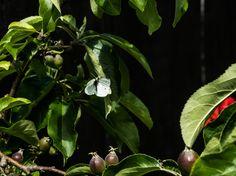 a weird composition #butterfly #flowers #garden #green #flowers #seeds #fujifilmxt2