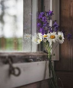immagine scoperto da ⚜️Luna de Antiguedades⚜️. Scopri (e salva!) immagini e video anche tu su We Heart It Artist Gallery, Bokeh, Congratulations, Glass Vase, Daisy, Presents, Plants, Pictures, Inspiration