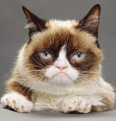 The Official Grumpy Cat