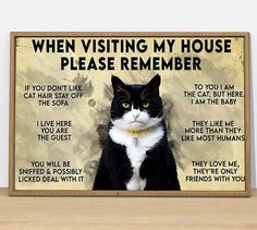 Animals And Pets, Funny Animals, Cute Animals, Crazy Cat Lady, Crazy Cats, Cute Cats, Funny Cats, Funny Cat Images, Cute Black Cats