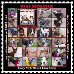 DIE  8-10-16  NOON  NYC URGENTPODR.ORG ALL are GOOD DOGS-many are WONDERFUL DOGS-most had BAD OWNERS