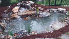 This is Tranquility package pond built for a customer by Living Waterscapes in Greensboro, NC. An 8' x 11' pond and waterfall with many bonuses.