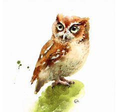 Maria Stezhko Watercolor Owl Bird Print 8 x 10 inches by CMwatercolors on Etsy