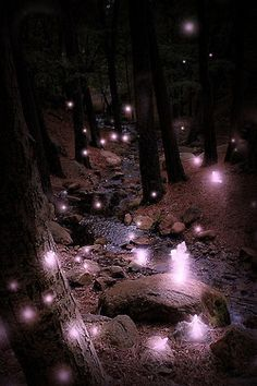 Puki in the forest. | FAVORITE PLACES AND SPACES | Pinterest