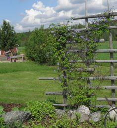 Veg Garden, Garden Edging, Garden Trellis, Garden Planters, Rustic Gardens, Outdoor Gardens, Labyrinth Garden, Greenhouse Gardening, Garden Structures